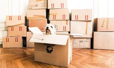 Moving is Ruff
