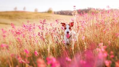 Safety Tips to keep your pets safe this Spring