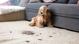 How to Keep Your Carpets Looking Like New When Life Happens.
