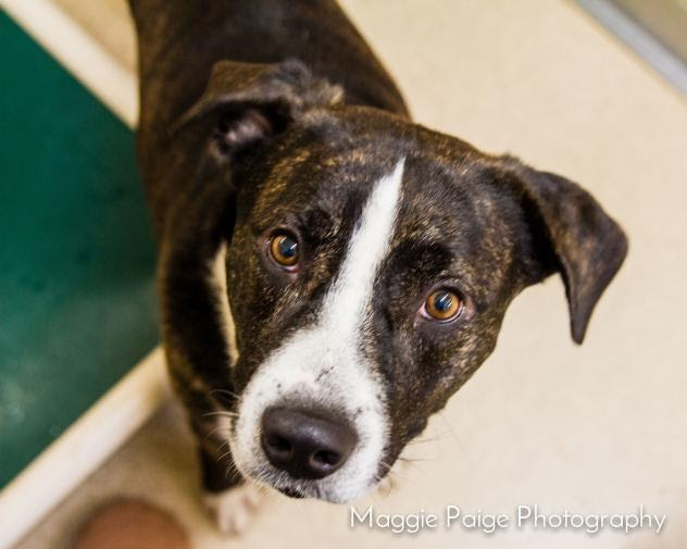 October is Adopt a Shelter Dog Month. Bring Your New Best Friend Home Today!
