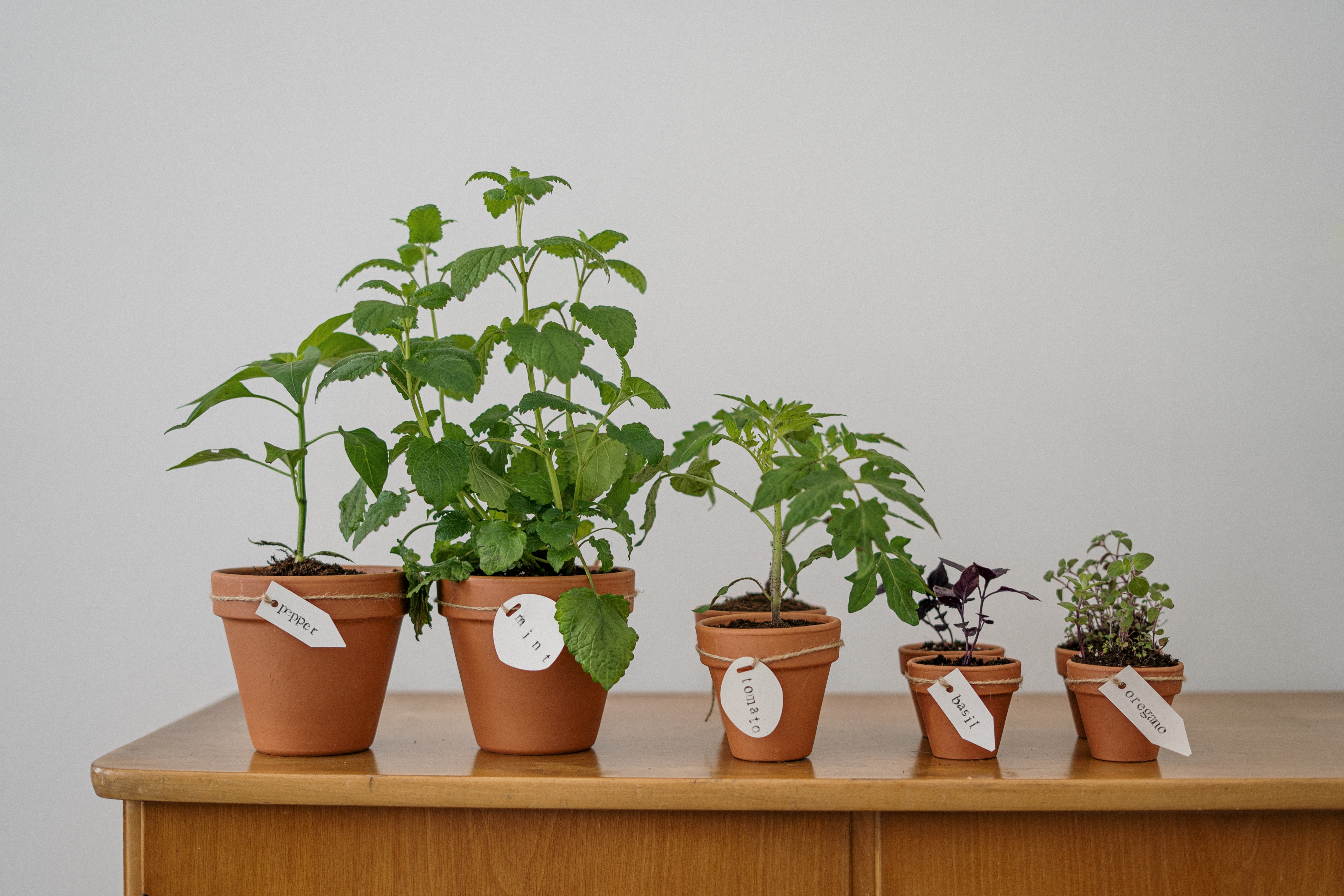 Illinois Indoor Gardening