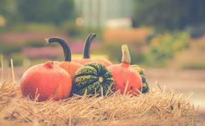 Pumpkin Patches Around The Chicago Suburbs